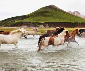 horses, iceland, and beautiful image