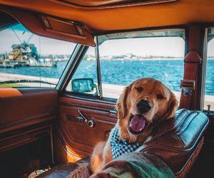 dog, travel, and animal image