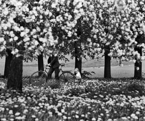 flowers, trees, and vintage image
