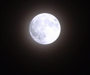 luna, moo, and moon image