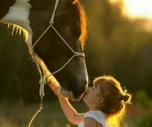 boy, horse, and love image