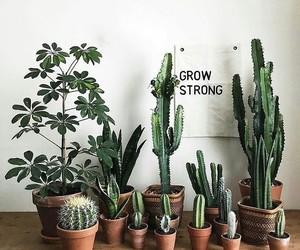 boho, cactus, and spring image