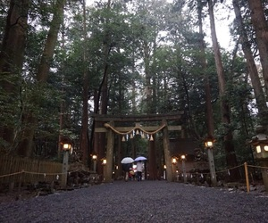 holy, 神社, and japan image
