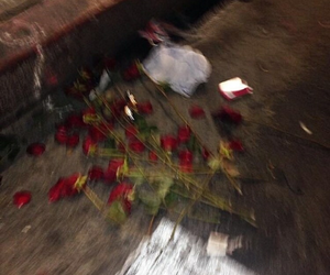 blurry and rose image