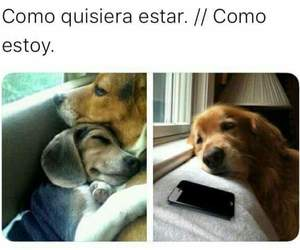 cachorros, dogs, and funny image
