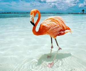 beach, flamingo, and sea image