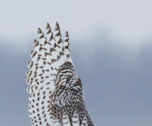 bird, white, and feathers image