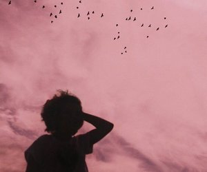 sky, pink, and bird image