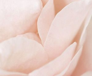 macro, petals, and pretty image