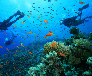 coral, corfu, and diving image