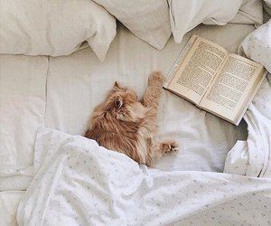 animal, bedsheets, and book image