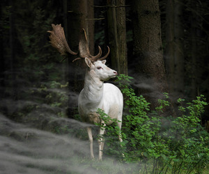 animal, nature, and forest image