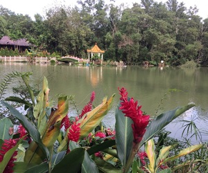 beauty, flower, and pond image