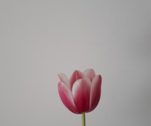 aesthetic, flower, and gift image