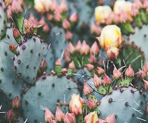 boho, cactus print, and cactus image