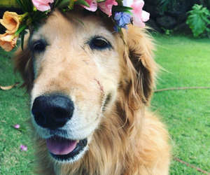 dog, flowercrown, and flowers image