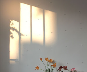 flowers, white, and light image