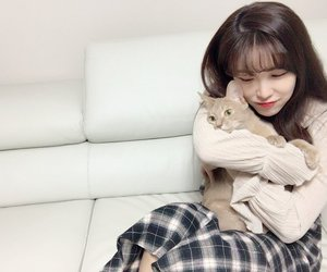 cat, jun hyosung, and secret image
