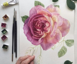 flower, rose, and draw image