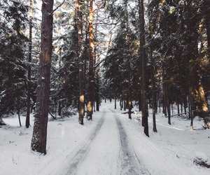 cold, forest, and snow image