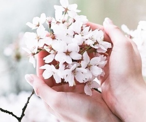 flowers, beautiful, and spring image