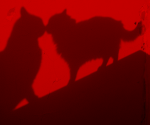 cat, red, and animal image