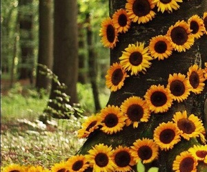 sunflower and forest image