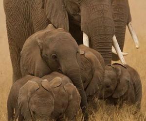 Animales, elefante, and naturaleza image