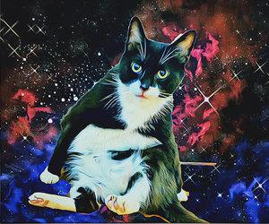 etsy, cat painting, and cat portrait image