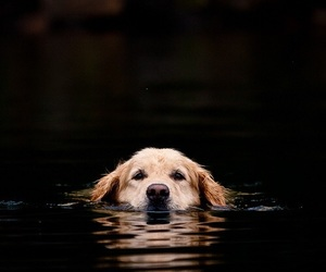 animal, bello, and dog image