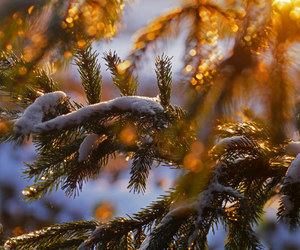 light, nature, and snow image