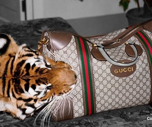 fashion, gucci, and tiger image