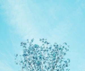 blue, wallpaper, and tree image