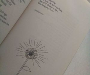 sunflowers, rupi kaur, and the sun and her flowers image