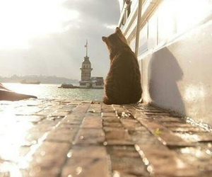 cat, istanbul, and turkey image