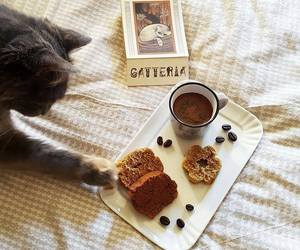 biscuits, break, and cat image