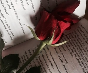 book and red rose image