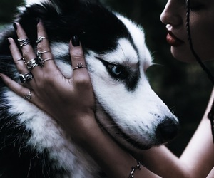 dog, husky, and animals image