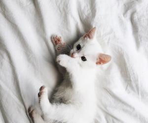 animal, OMG, and cute image