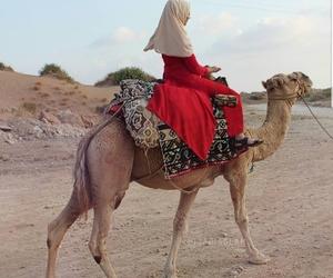 camel and hijâbi image