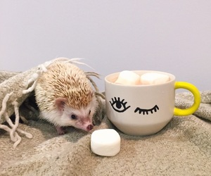 animals, hedgehog, and cute image