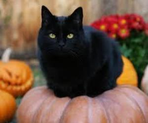 cat, black, and kitty image