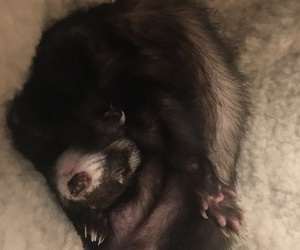 animal, ferret, and relax image