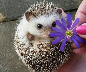 animals, aww, and flower image