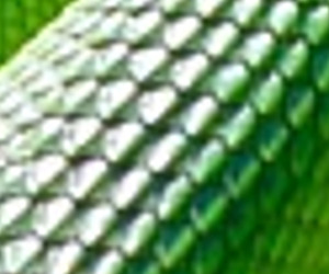 green, reptilian, and texture image