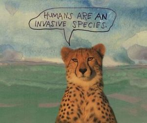 quotes, animals, and art image