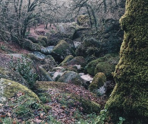brest, enchanted, and forest image