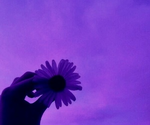 flowers, sky, and purple image