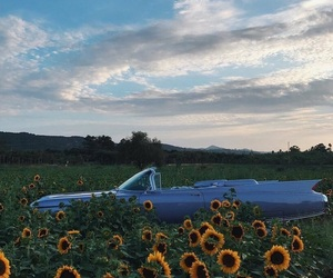 car, sunflower, and flowers image