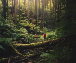 california, forrest, and outdoors image